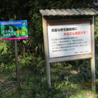山楽会 大江高山に登る