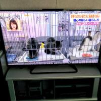 [小樽観光タクシー・ジャンボタクシー]北海道小樽観光タクシー高橋の[新しいテレビ・液晶AQUOSです。]