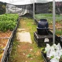 遠心式加湿器 MT5500 安行 苗木栽培 湿度管理 通販