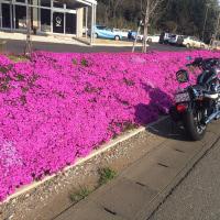 ロードバイクとモーターバイク