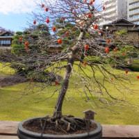 イギリス刺繍展と庭と街路樹