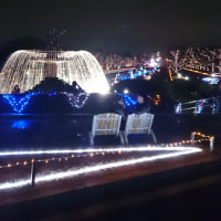 昭和記念公園イルミネーション 【立川市で肩こり・腰痛 ヒロ整骨院女性先生】