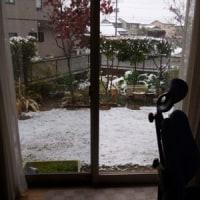 あららら・・・、雪だ!