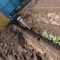 トマトの畝作りを始めました