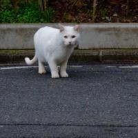 最近であった猫たち MC5235-4601