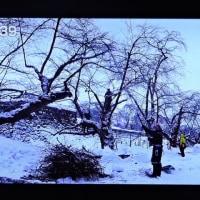 2/22 雪の青森でリンゴの選定をする