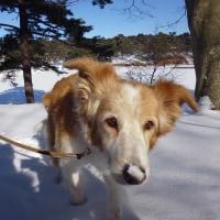 ハナ雪・雪上散歩