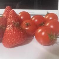 イチゴと気温