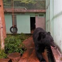 保護飼育している高代寺・「とよ君」、獣舎の掃除に登りました。