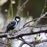 岡崎公園の小鳥達 その5