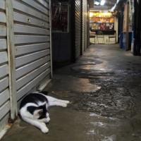 梅雨真っ最中の沖縄の猫たち 2016年5月 その33