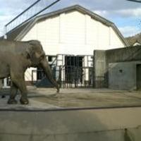 動物園~京都市立動物園~