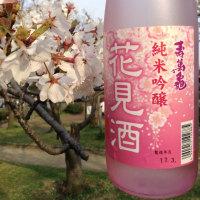 ★花見酒、殿がご所望じゃ!日本の良さを満喫!