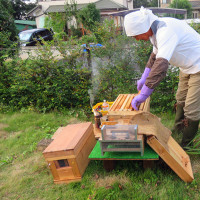 ☆☆☆ 連日の出張=それと今日は蜜蜂のお世話などを~金曜日・・・