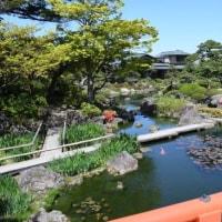 大根島由志園のボタンを訪ねて 平成29年4月23日(日)