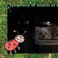 ゆうきと みづきの 早秋 虫たちの Symphony