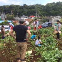 大根収穫体験