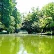 一足飛びに夏突入の石神井公園です 其の5