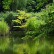 真夏の日差しになった善福寺公園です その4