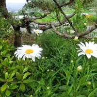 初夏の色*初夏の花