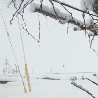 今年初の除雪作業