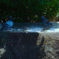 aves 525