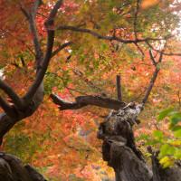 日本庭園の秋(Ⅲ)
