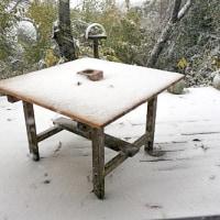 1769   積もる初雪やさしくしたき人はおらず