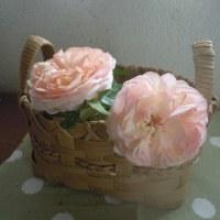 今朝のプチ庭の花