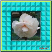 額縁付の花