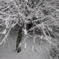 33年ぶりの積雪19cm