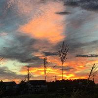 今日の夕焼け雲