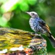 20/Jul  水盤の野鳥と花達