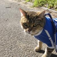 朝のお散歩だって言うのに暑すぎですよね!