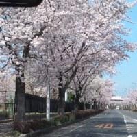 4月1日(月) 梅のつぶやき