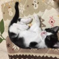 猫とマーガリンの日