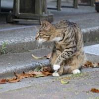 猫探訪・・身づくろい中の猫ちゃん