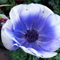 温室の花から