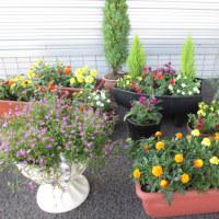 さわら店の お花たち