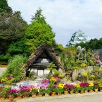 名古屋城見学会 ー 菊花展と本丸御殿