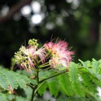 皇居東御苑の、樹に咲く花