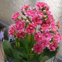 お花に癒されて・・・