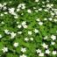 富岡町の大倉山「春の花」2010フォトブック