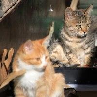 猫探訪・・子猫とお母さん猫