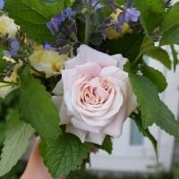 お庭の花で花束を(1)