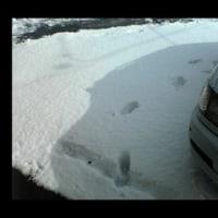 雪かきビフォーアフターその1