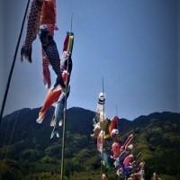 「ツツジ鑑賞&甘夏ミカン狩りウオーキング」(まむしの湯連携事業)無事終了。