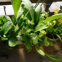 野菜がノビノビ
