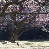 早春の後楽園