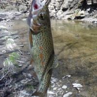 5月4日 やっと釣りができた。  23